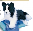 Border Collie 16