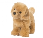 Golden Retriever 10